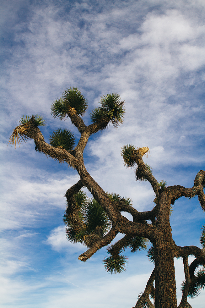 Joshua-Tree-National-Park-14
