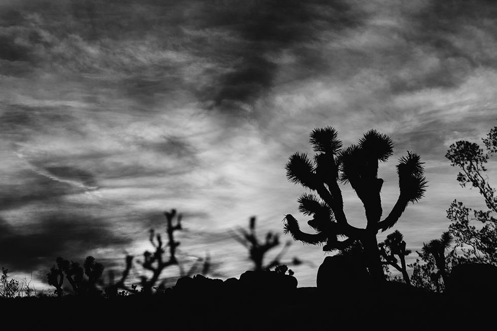Joshua-Tree-National-Park-Black-White-17