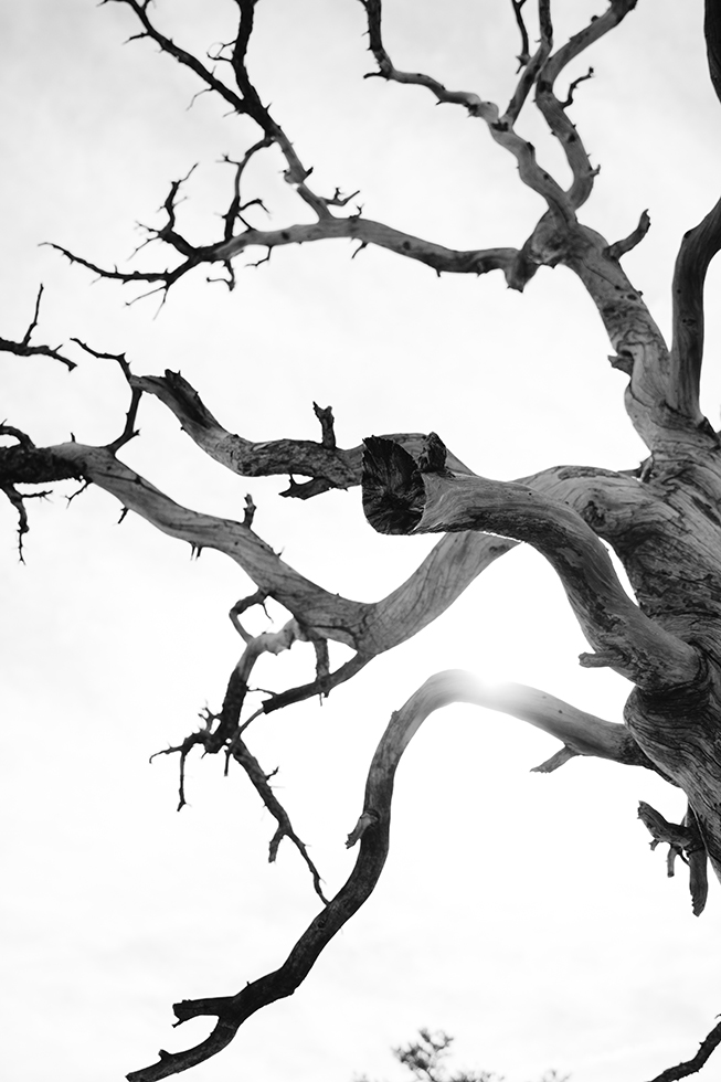 Joshua-Tree-National-Park-Dead-Tree-Black-White-8