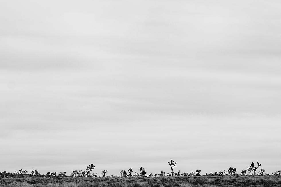 Joshua-Tree-National-Park-Landscape-13