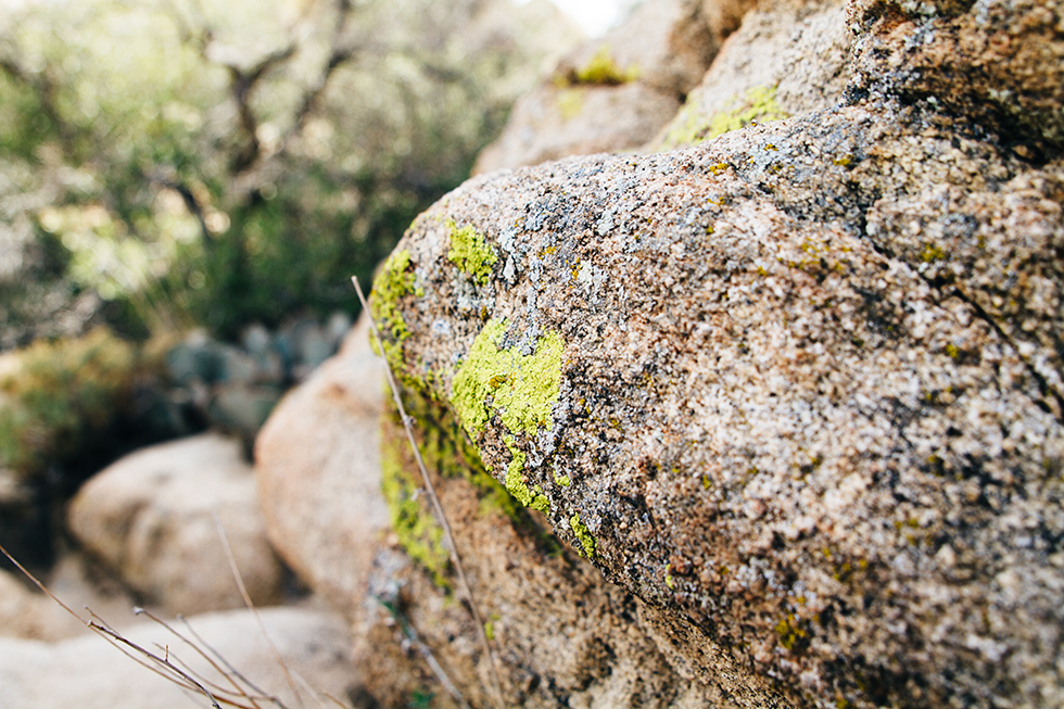 Joshua-Tree-National-Park-Lichen-Rock-6
