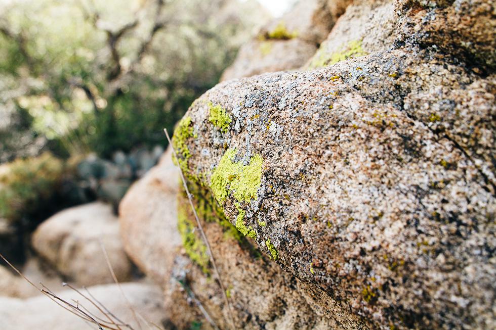 Joshua-Tree-National-Park-Lichen-Rock-6