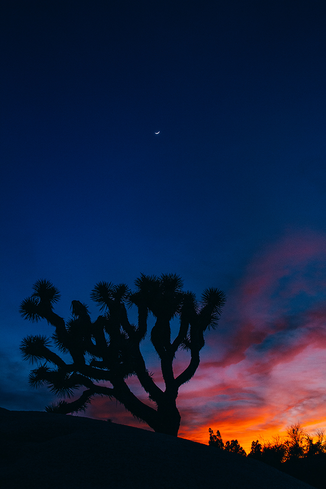 Joshua-Tree-National-Park-Moon-Sunset-Crescent-Silhouette-26
