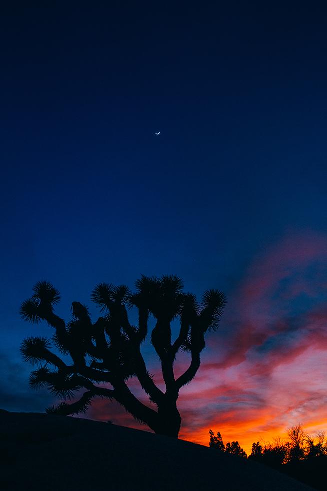 Joshua-Tree-National-Park-Moon-Sunset-Crescent-Silhouette-26