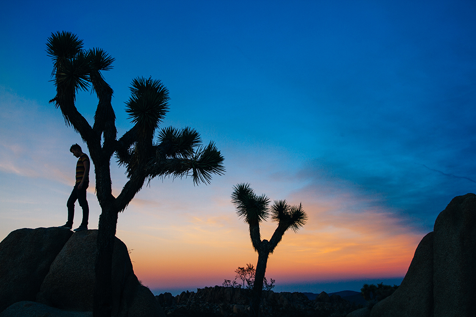 Joshua-Tree-National-Park-Portrait-Sunset-Silhouette-23