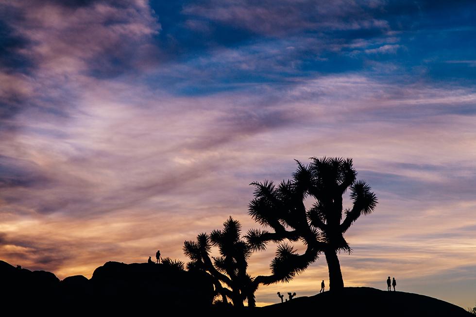 Joshua-Tree-National-Park-Silhouette-Sunset-Sky-Bright-20