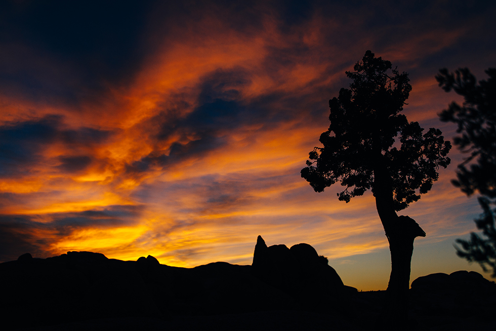 Joshua-Tree-National-Park-Sunset-Silhouette-25