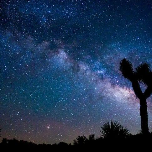 starry night sky with joshua tree