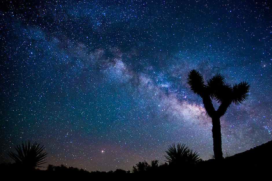 starry night sky with joshua tree